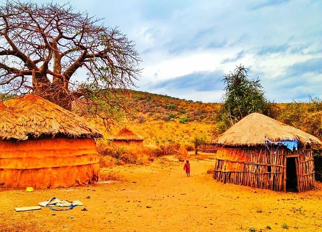 Village of Tanzania: nature tree landscape